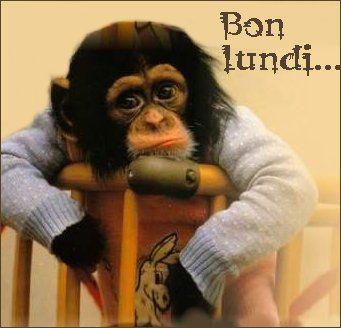 Bon Lundi - singe